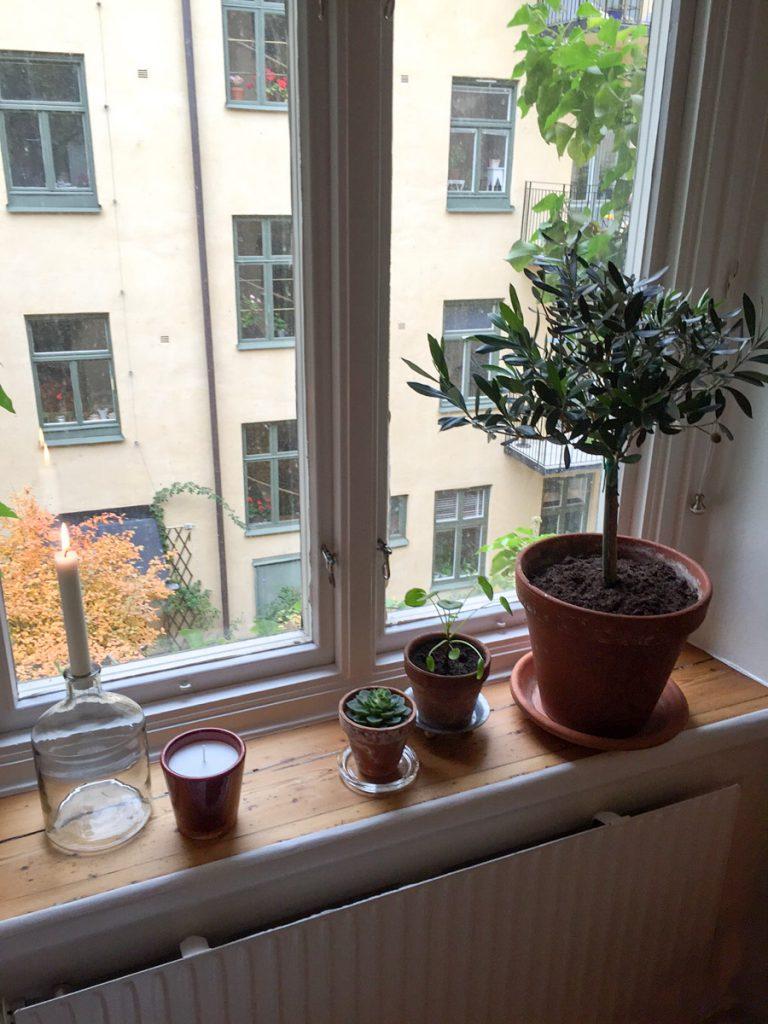 olivträd, lerkruka, lerkrukor, doftljus, stearinljus, glasflaska, elefantöra, fetbladiga växter